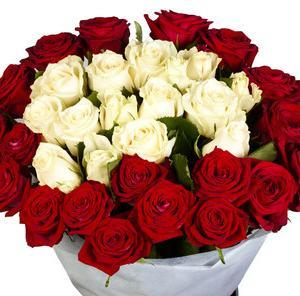 25red and white roses