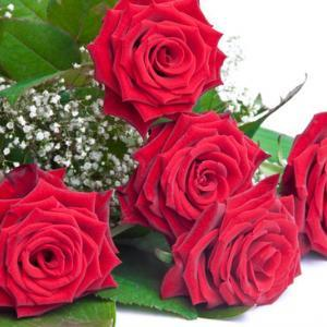 5 red roses with babys breath