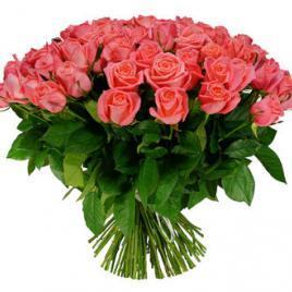 51 peach roses