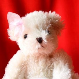 Little White Teddy